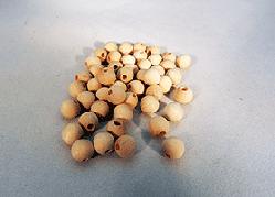 Wood Craft Bead 5/16 inch | Bear Woods Supply